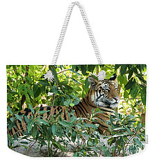 Sleepy Cat Weekender Tote Bag by Pravine Chester