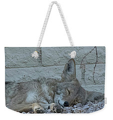 Weekender Tote Bag featuring the photograph Sleepy Li'l Coyote by Anne Rodkin