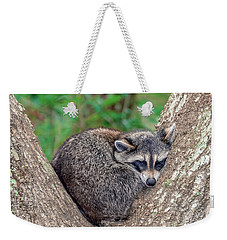 Sleepy Raccoon Sticking Out Tongue Weekender Tote Bag by Rob Sellers