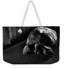 Weekender Tote Bag featuring the photograph Small Turtle Exploring The Surroundings by Eduardo Jose Accorinti