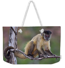Weekender Tote Bag featuring the photograph Smarty Pants by Tony Beck