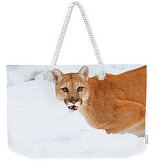 Snowy Cougar Weekender Tote Bag by Steve McKinzie