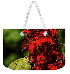 Weekender Tote Bag featuring the photograph Southern Dogface On Cardinal Flower by Barbara Bowen