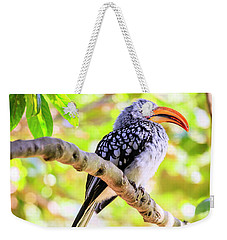 Weekender Tote Bag featuring the photograph Southern Yellow Billed Hornbill by Alexey Stiop