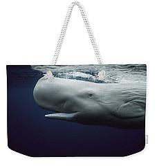 Sperm Whale Physeter Macrocephalus Weekender Tote Bag by Hiroya Minakuchi
