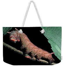 Sphinx Moth Caterpillar Weekender Tote Bag