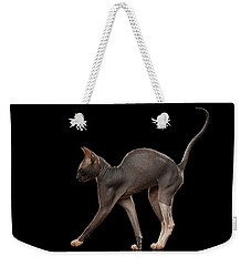 Sphynx Cat Funny Standing Isolated On Black Mirror Weekender Tote Bag