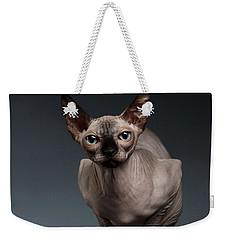 Sphynx Cat Sits In Front View On Black  Weekender Tote Bag