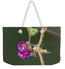 Spiderling Plume Moth On Wineflower Weekender Tote Bag