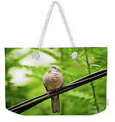 Spotted Dove   Weekender Tote Bag