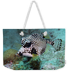Weekender Tote Bag featuring the photograph Spotted Trunkfsh by Jean Noren