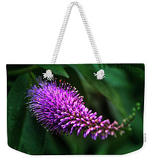 spring beautiful flowers callistemon in subtropics of Russia Weekender Tote Bag