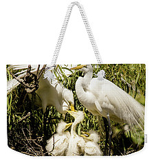 Weekender Tote Bag featuring the photograph Spring Egret Chicks by Robert Frederick