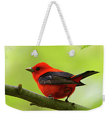 Spring Flame - Scarlet Tanager Weekender Tote Bag