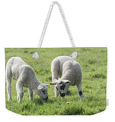Weekender Tote Bag featuring the photograph Spring Lambs by Scott Carruthers