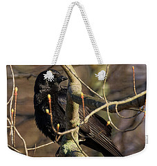 Weekender Tote Bag featuring the photograph Springtime Crow by Bill Wakeley