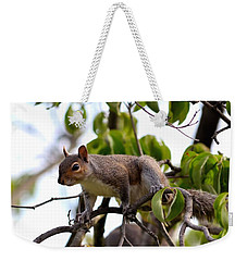 Squirrel Weekender Tote Bag by Kathy Eickenberg