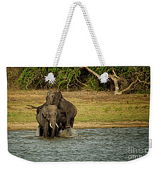 Sri Lankan Elephants  Weekender Tote Bag