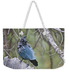 Weekender Tote Bag featuring the photograph Stellar's Jay by Gary Lengyel