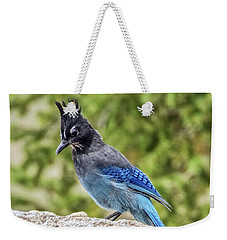 Steller's Jay On Granite Weekender Tote Bag