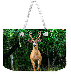 Weekender Tote Bag featuring the photograph Still In Velvet by Katie Wing Vigil