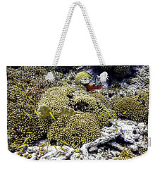 Weekender Tote Bag featuring the photograph Stoplight Parrotfish And Yellow Chromis by Perla Copernik