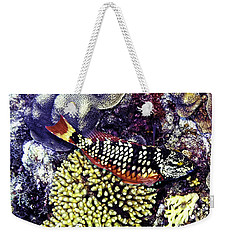 Weekender Tote Bag featuring the photograph Stoplight Parrotfish Initial Phase by Perla Copernik