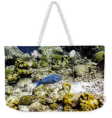 Weekender Tote Bag featuring the photograph Stoplight Parrotfish  by Perla Copernik