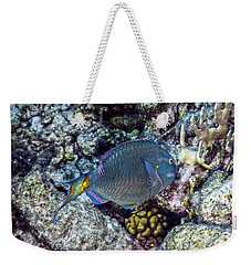Weekender Tote Bag featuring the photograph Stoplight Parrotfish Terminal Phase by Perla Copernik