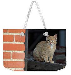 Street Cat Weekender Tote Bag by Scott Warner