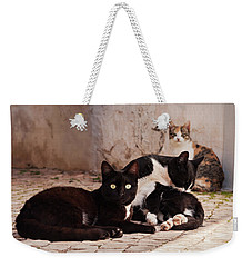 Weekender Tote Bag featuring the photograph Street Cats - Portugal by Barry O Carroll