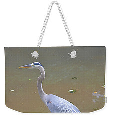 Weekender Tote Bag featuring the photograph Strider by Kathy Kelly