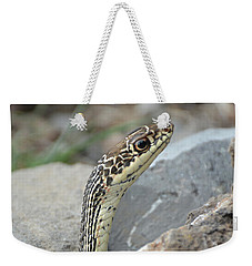 Striped Whipsnake, Masticophis Taeniatus Weekender Tote Bag