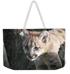 Weekender Tote Bag featuring the photograph Studying The Ways by Laddie Halupa
