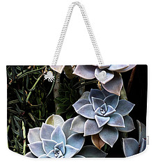 Weekender Tote Bag featuring the photograph Succulents Graptopetalum Paraguayense     by Catherine Lau