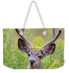 Summer Mule Deer Weekender Tote Bag