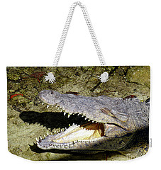 Weekender Tote Bag featuring the photograph Sunbathing Croc by Francesca Mackenney