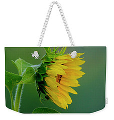 Weekender Tote Bag featuring the photograph Sunflower 2017 2 by Buddy Scott