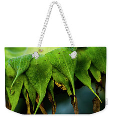Weekender Tote Bag featuring the photograph Sunflower 2017 4 by Buddy Scott
