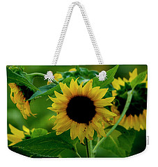 Weekender Tote Bag featuring the photograph Sunflower 2017 5 by Buddy Scott