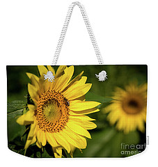 Weekender Tote Bag featuring the photograph Sunflower And Bee by Sandy Molinaro