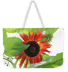 Weekender Tote Bag featuring the photograph Sunflower In The Afternoon by Rick Morgan