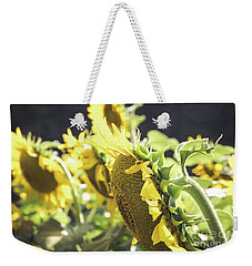 Weekender Tote Bag featuring the photograph Sunflowers 4 by Andrea Anderegg