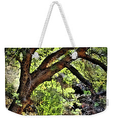 Sunlit Desert Canyon Tree Weekender Tote Bag by Barbara Chichester