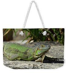 Sunning Green Iguana On A Rock Ledge Weekender Tote Bag by DejaVu Designs