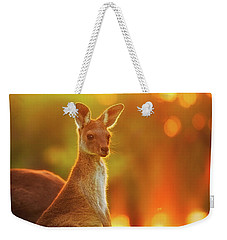 Weekender Tote Bag featuring the photograph Sunset Joey, Yanchep National Park by Dave Catley