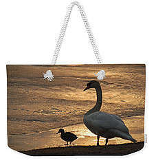 Weekender Tote Bag featuring the photograph Swan And Baby At Sunset by Richard Bryce and Family
