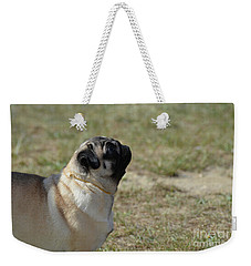Sweet Face Of A Pug Dog Weekender Tote Bag by DejaVu Designs