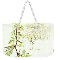 Weekender Tote Bag featuring the painting Sweet Thorn Botanical Illustration by Heidi Kriel