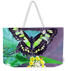 Tailed Jay Visits Lantana Weekender Tote Bag by Betty Buller Whitehead
